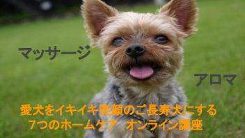 愛犬をイキイキ笑顔のご長寿犬にする7つのレッスン